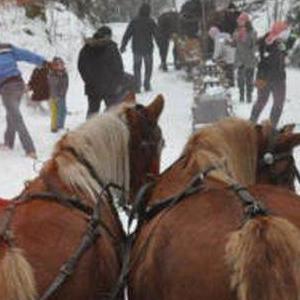 konie zima