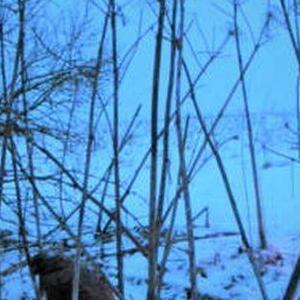 sniezny las